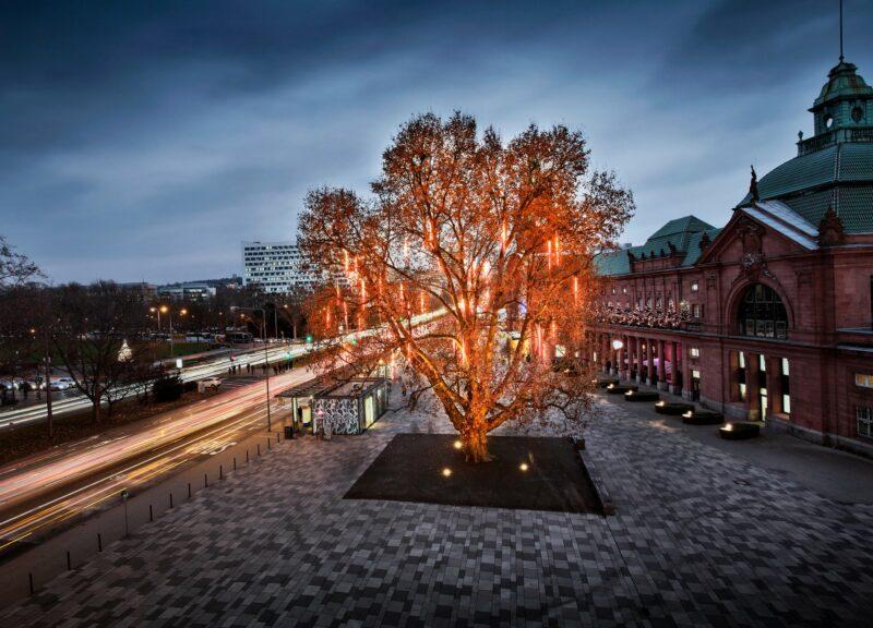 Beleuchteter Baum in der Innenstadt